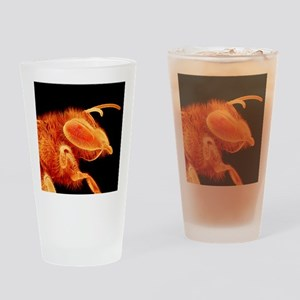 Honey bee, SEM Drinking Glass