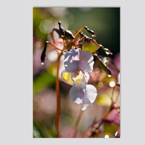 Himalayan balsam (Impatie Postcards (Package of 8)