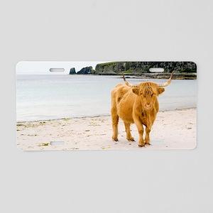 Highland cow on a beach Aluminum License Plate