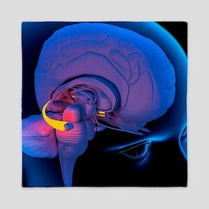 Hippocampus in the brain, artwork Queen Duvet