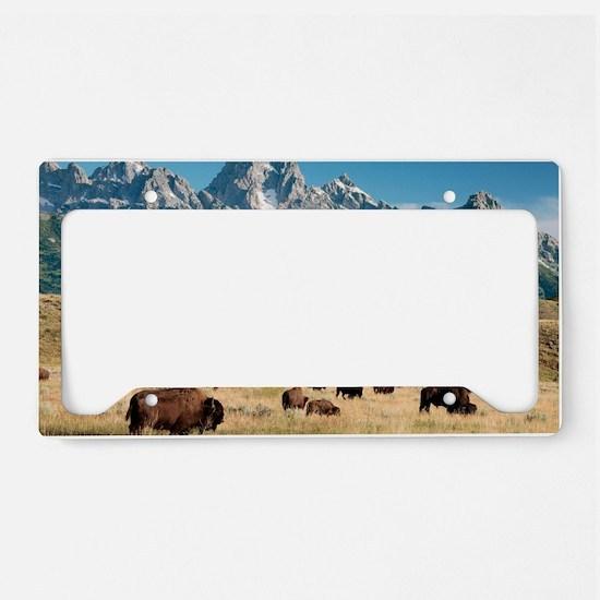 Herd of American Bison License Plate Holder