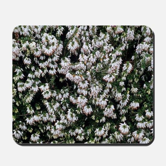 Heather 'White Hall' flowers Mousepad