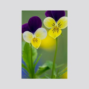 Heartsease (Viola tricolor) Rectangle Magnet