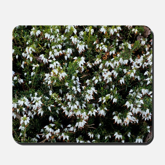 Heather 'Snow Queen' flowers Mousepad