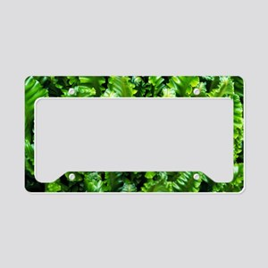 Hart's tongue fern License Plate Holder