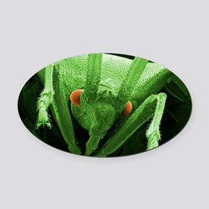 Head of a shield bug, SEM Oval Car Magnet