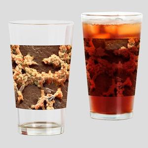 H1N1 swine flu virus, SEM Drinking Glass