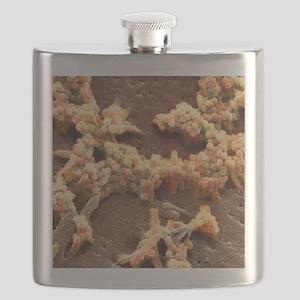 H1N1 swine flu virus, SEM Flask
