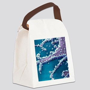 H1N1 flu virus particles, SEM Canvas Lunch Bag