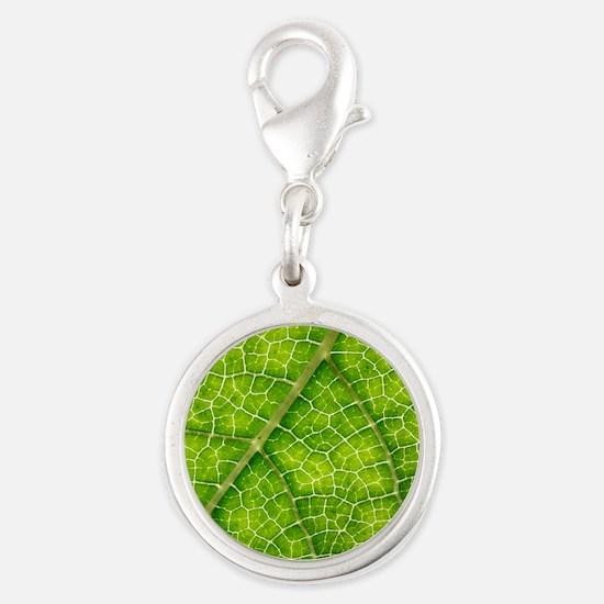 Gunnera plant leaf veins Silver Round Charm