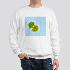 Green alga, light micrograph Sweatshirt