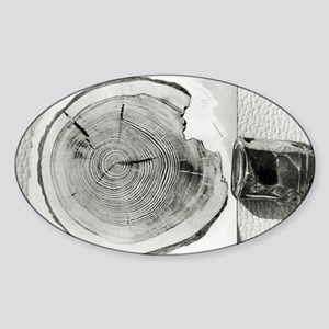 Growth rings on a tree from Tungusk Sticker (Oval)