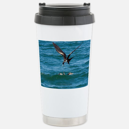 Great frigatebird and blue-foot Stainless Steel Tr