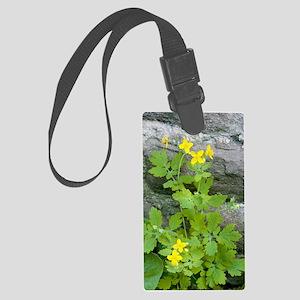 Greater celandine (Chelidonium m Large Luggage Tag