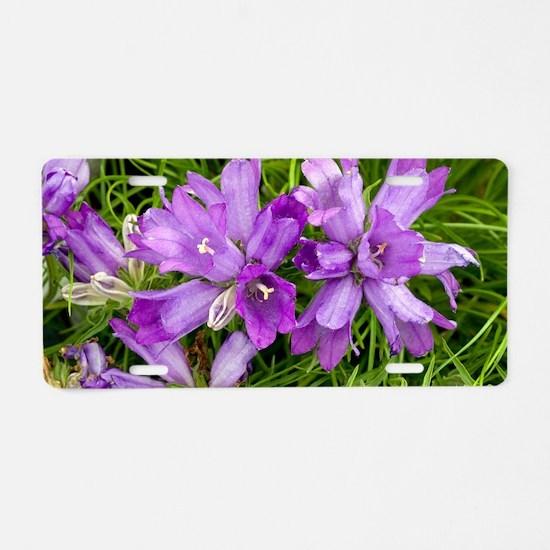 Grassy bells (Edraianthus g Aluminum License Plate