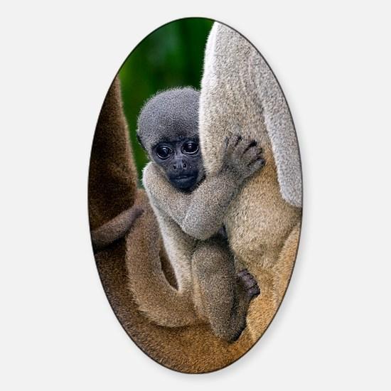 Gray woolly monkey baby Sticker (Oval)