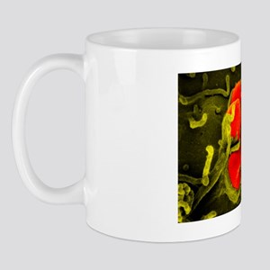 Gonorrhoea bacteria, SEM Mug
