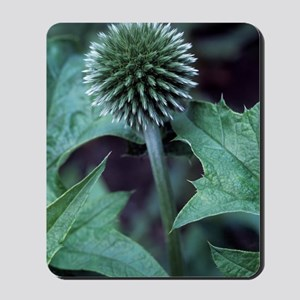 Globe thistle 'Veitch's Blue' Mousepad