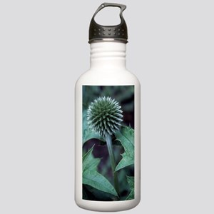 Globe thistle 'Veitch' Stainless Water Bottle 1.0L
