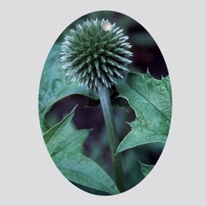Globe thistle 'Veitch's Blue' Oval Ornament