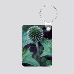 Globe thistle 'Veitch's Bl Aluminum Photo Keychain