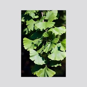 Ginkgo leaves (Ginkgo biloba) Rectangle Magnet