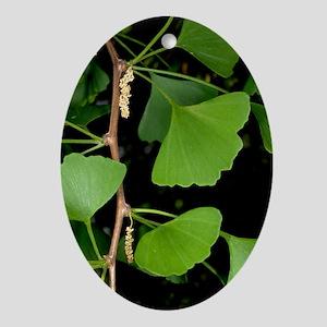 Ginkgo biloba Oval Ornament