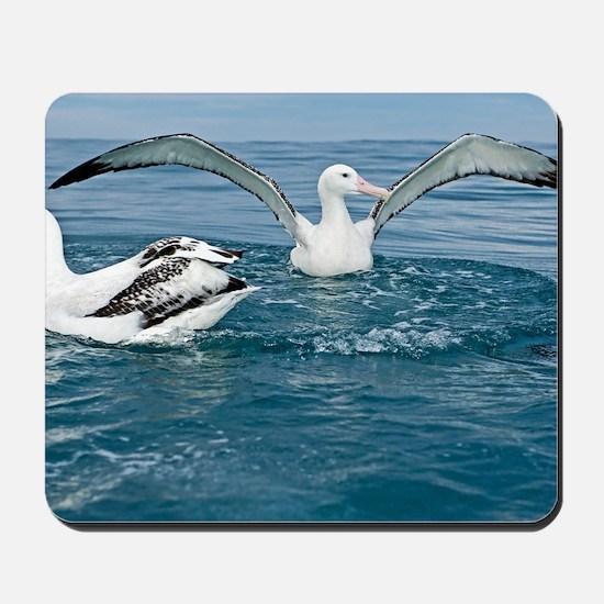 Gibson's wandering albatrosses Mousepad