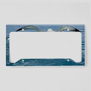 Gibson's wandering albatrosse License Plate Holder