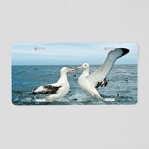 Gibson's wandering albatros Aluminum License Plate