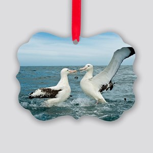 Gibson's wandering albatrosses Picture Ornament
