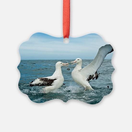 Gibson's wandering albatrosses Ornament