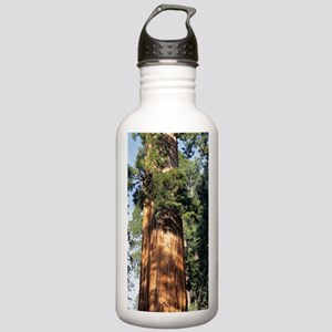 Giant sequoia Stainless Water Bottle 1.0L