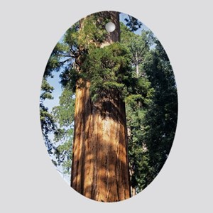 Giant sequoia Oval Ornament