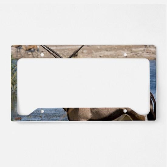 Gemsboks License Plate Holder