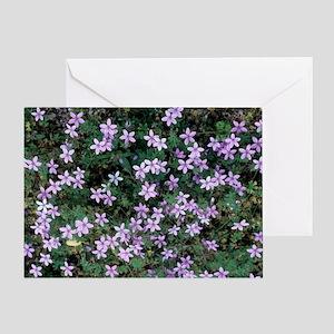 Geranium asphodeloides flowers Greeting Card