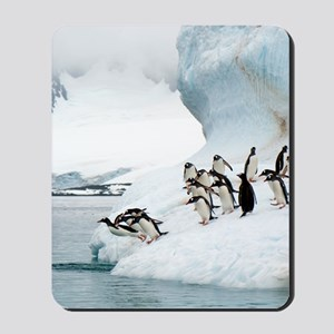 Gentoo penguins jumping into the sea Mousepad