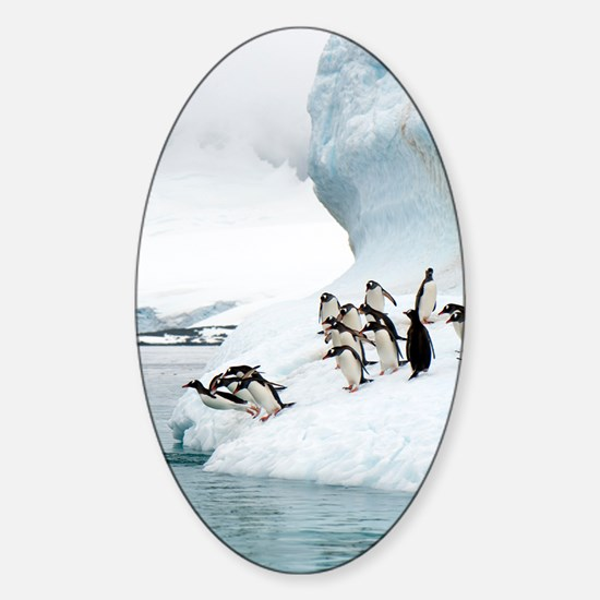 Gentoo penguins jumping into the se Sticker (Oval)