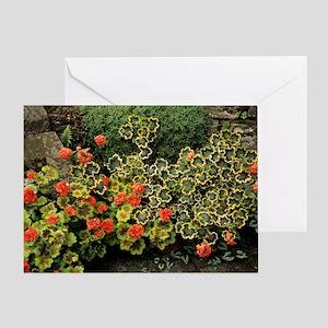 Garden geraniums Greeting Card