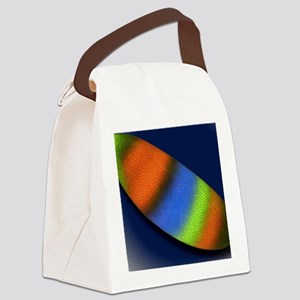 Gene expression in fruit fly embr Canvas Lunch Bag