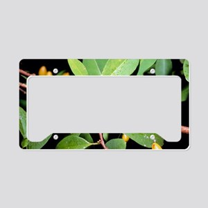 Fruit and leaves of cocaine p License Plate Holder