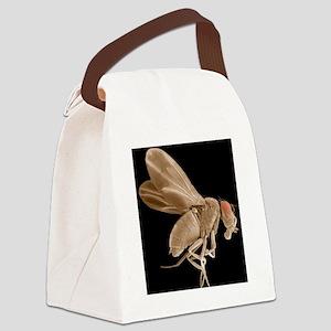 Fruit fly, SEM Canvas Lunch Bag