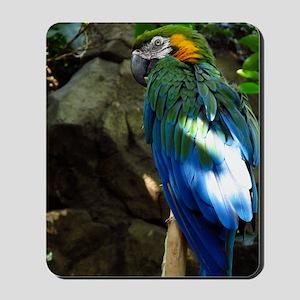 Epic Macaw Mousepad