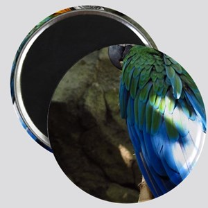 Epic Macaw Magnet