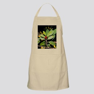 Fruit and leaves of cocaine plant Apron