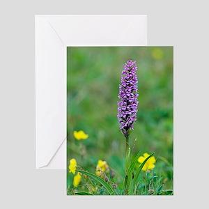 Fragrant orchid (Gymnadenia conopsea Greeting Card