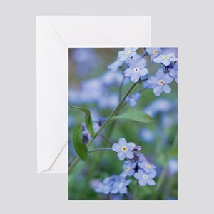 Forget-me-nots (Myosotis sylvatica) Greeting Card