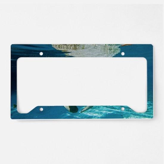 Florida manatee swimming License Plate Holder