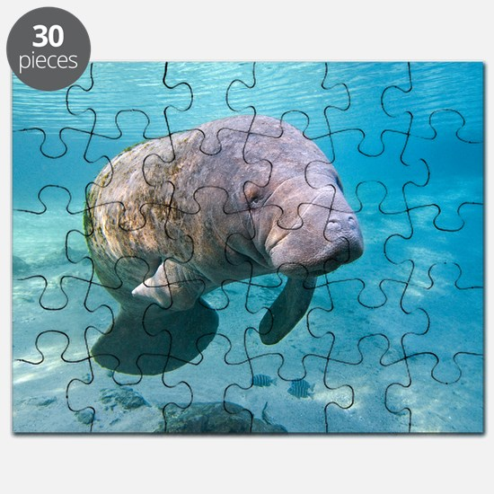 Florida manatee swimming Puzzle