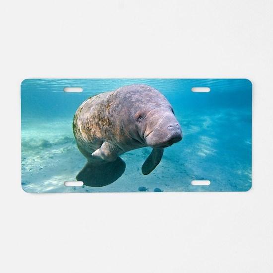 Florida manatee swimming Aluminum License Plate